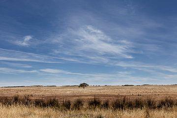 Eukalyptusbaum im Weizenfeld, Victoria Australien von Tjeerd Kruse