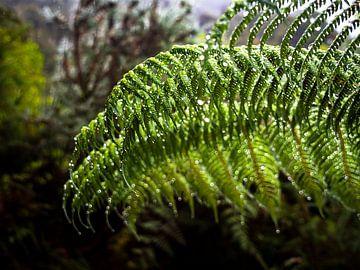 Dauw aan de bladeren in Abel Tasman National Park in Nieuw-Zeeland van Rik Pijnenburg