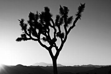 Sonnenuntergang über dem Joshua Tree Nationalpark, Kalifornien, USA von Tjeerd Kruse