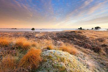 Heide landschap in Drenthe met mist tijdens zonsopkomst van Bas Meelker