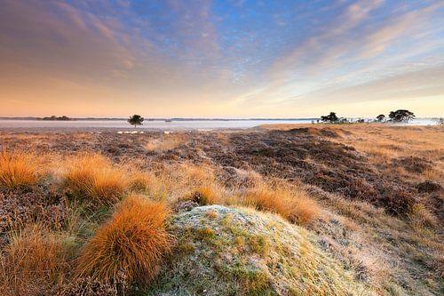 Heide landschap in Drenthe met mist tijdens zonsopkomst