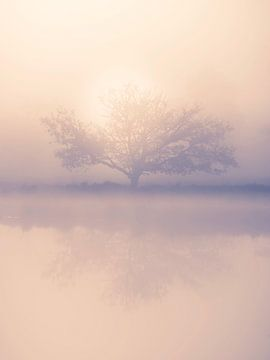 Silhouet en weerspiegeling van boom in een mistige zonsopkomst van Michel Seelen