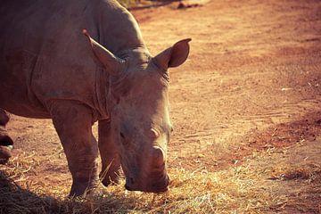 rhino von Dieter Emmerechts