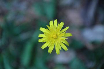 Gele bloem van Lisette Hendrickx