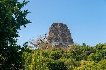Guatemala: Tikal (Yax Mutal) von Maarten Verhees