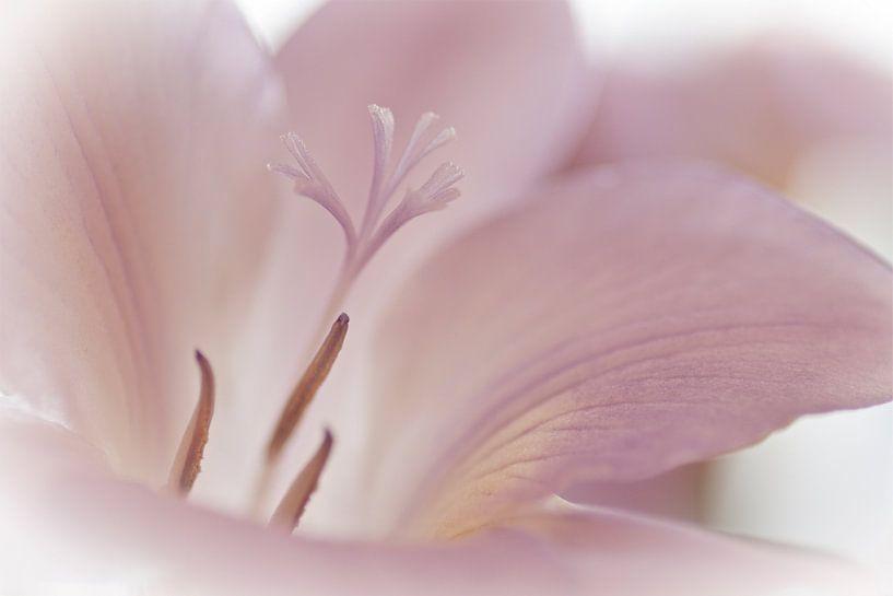 Prachtige bloem.. van Miranda van Hulst