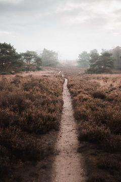 Wandelen naar het onbekende | De Veluwse heide van Nanda van der Eijk