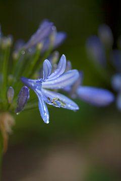 Zomaar een bloem van peter reinders