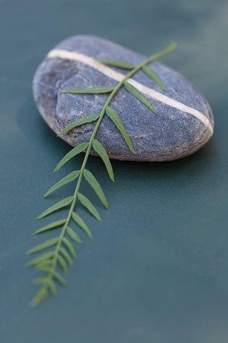 Natuursteen met groene tak