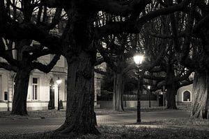 Kastanjebomen Sophialaan Den Haag van
