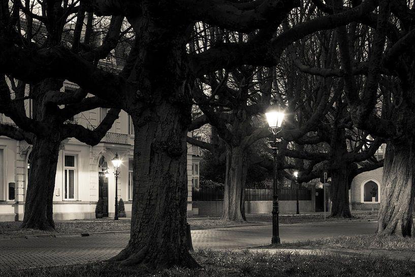 Kastanjebomen Sophialaan Den Haag van Raoul Suermondt