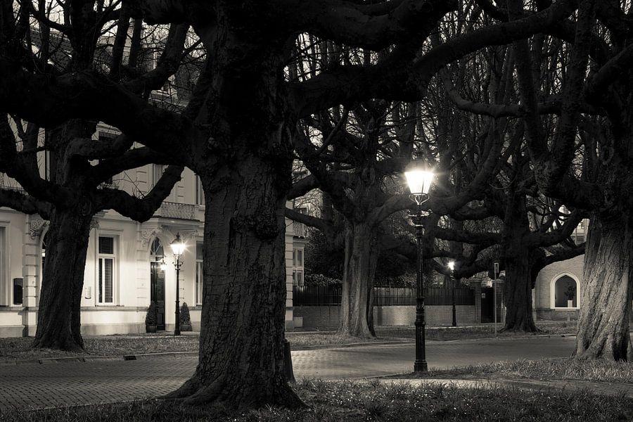 Kastanjebomen Sophialaan Den Haag