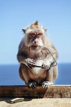 aapje met zonnebril van Ronenvief