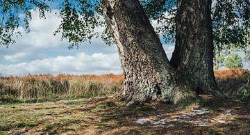 Treek Boom van Auke Hamers