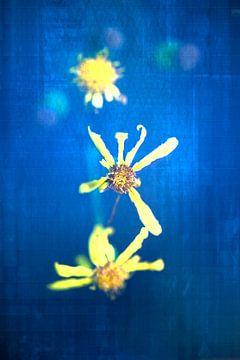 drei gelbe Blumen mit etwas blauer Fantasie von Ribbi The Artist