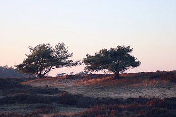 Twee bomen op de Veluwse heide van Cinthia Mulders