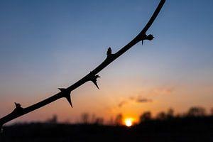 silhout van een eenzame tak tijdens zonsondergang van Kim Willems