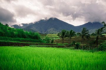 Groene rijstvelden Bali van road to aloha