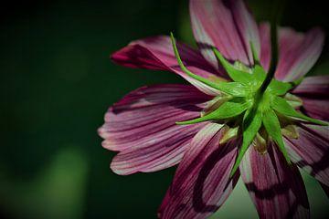 Achterkant bloem van Dorien Boekema