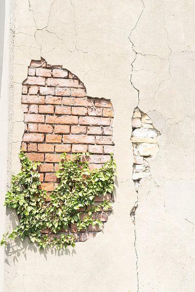 Gebroken muur van Diana Kors