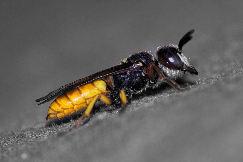 Wasp van BL Photography