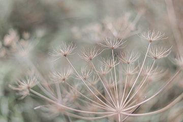 Pflanze in den Dünen von DsDuppenPhotography