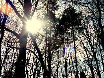 Zon door hoge bomen van Angelique Roelofs