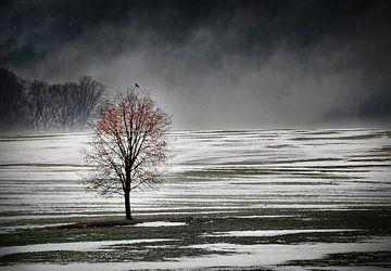 Eenzame boom in de ochtend mist van Gabsor Fotografie