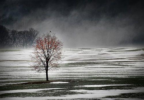 Eenzame boom in de ochtend mist van