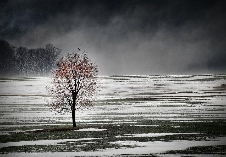 Eenzame boom in de ochtend mist