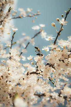 Bee Cherry von thePhilograph