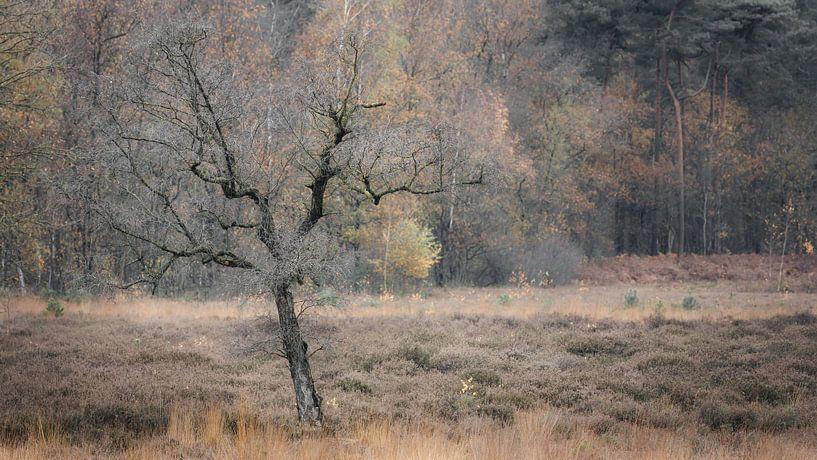 Kale boom in herfstkleurige omgeving van Michel Seelen
