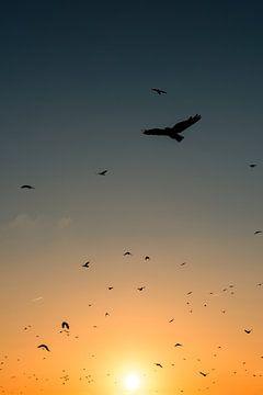 kraaien zwerm zonsondergang van Reno  van Dijk
