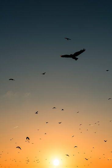 kraaien zwerm zonsondergang