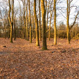 Kaapse bossen van Jaap Mulder