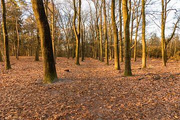 Kaapse bossen