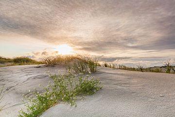 Strandflieder in der goldenen Abendsonne von Ursula Reins