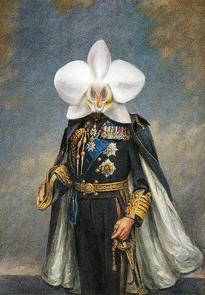 King Orchid van Stoka Stolk