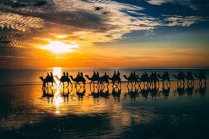 Kamelen bij zonsondergang Australië van Eveline Dekkers