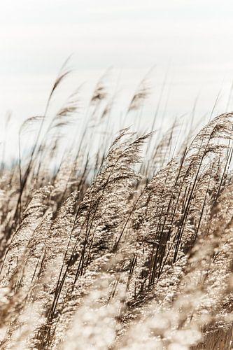 Pluimen in de wind