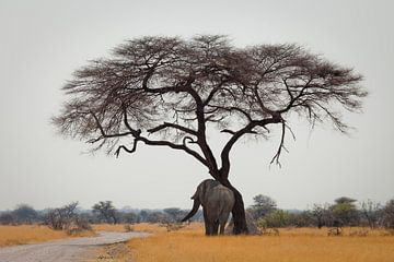 Ein Elefant der sich am Baum reibt von Remco Siero