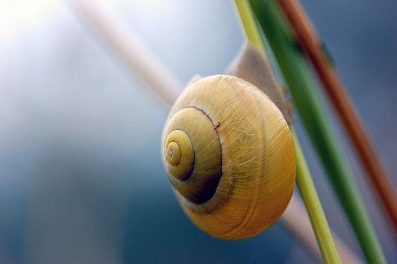 Close-up van een slak hangend aan een tak