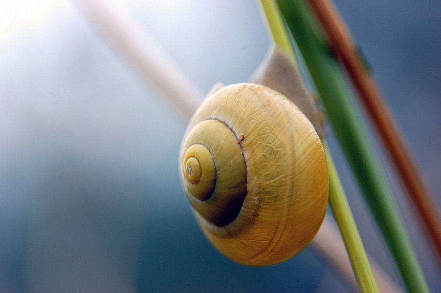 Close-up van een slak hangend aan een tak van Gabsor Fotografie