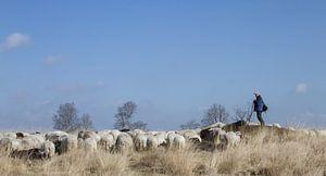De herder en zijn kudde