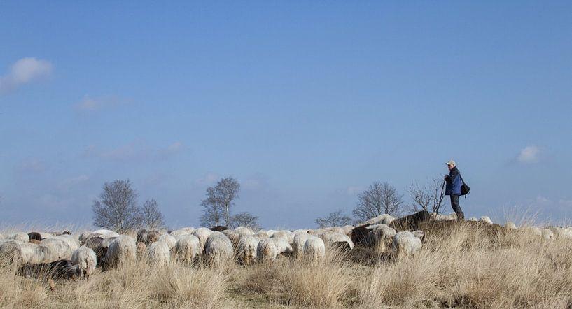 De herder en zijn kudde van Jacco Richters