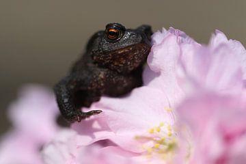 Frosch auf Blüte von Esmee Eeltink