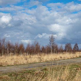 wolken boven het Peellandschap van Hetwie van der Putten