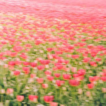 Tulpenveld sur Foto NVS