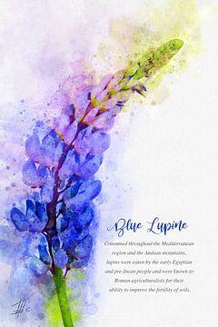 Blaue Lupine von Theodor Decker