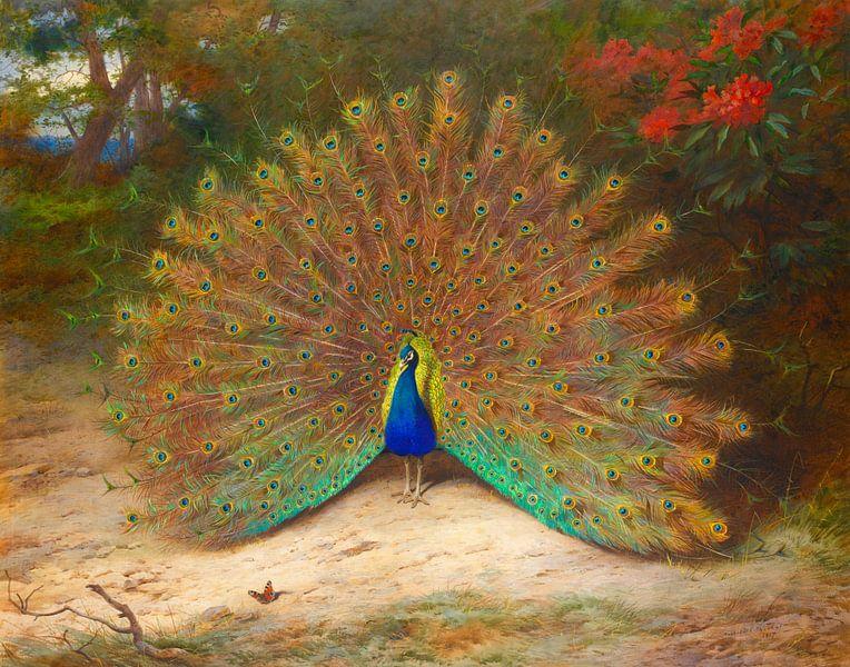 Archibald Thorburn. Pauw  en vlinder van 1000 Schilderijen